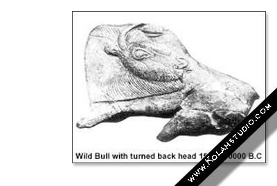 Wild Bull With turned back head